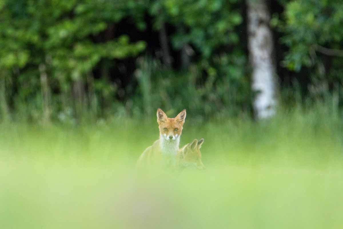 wildpark_schmidt-fuchs