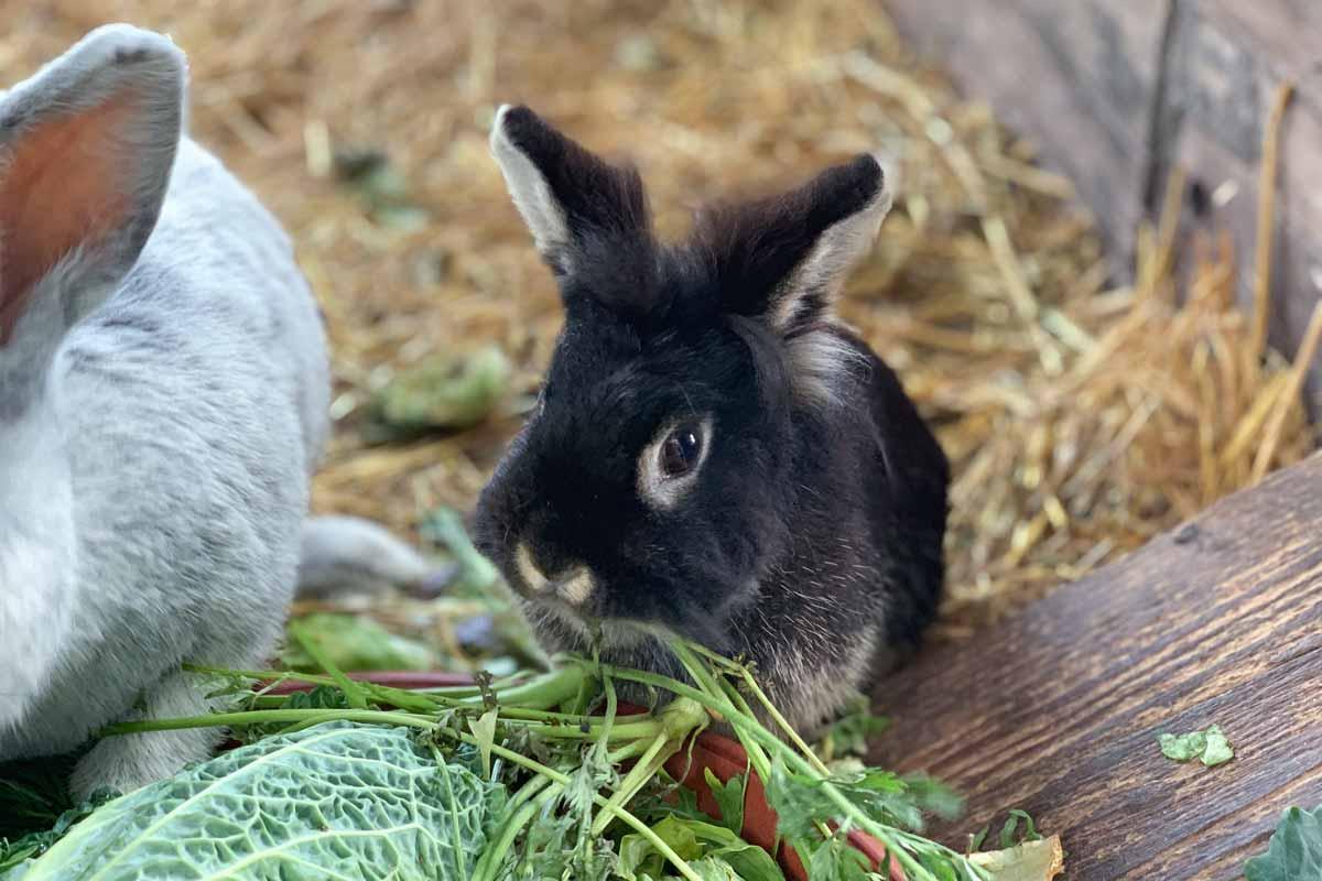wildpark_schmidt-kaninchen2